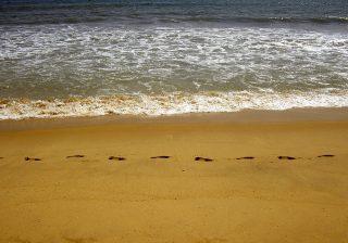琵琶湖で泳ごう♪泳げる場所、おすすめビーチ、わんちゃんも大歓迎なペット専用ビーチも♪ビーチ近くの立ち寄れるお風呂やスーパー、100均まとめ。