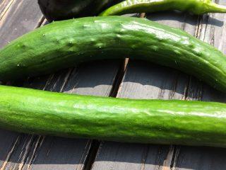 庭の花壇で野菜作り。現在の成長の様子。いぼなしキュウリは本当にツルツル♪ 野菜作りの天敵うどんこ病について。